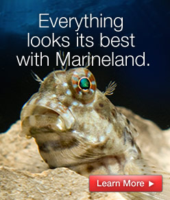 Everything looks its best with Marineland