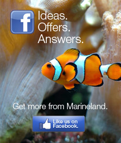 Ideas.  Offers.  Answers.  Get more from Marineland.