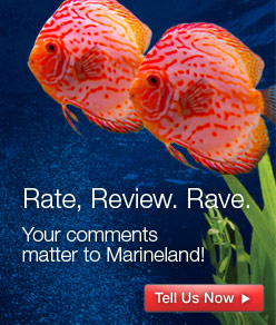 Rate.  Review.  Rave.  Your comments matter to Marineland.