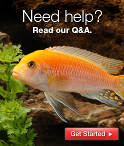 Need help?  Read our Q&A.
