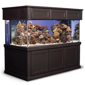 Find a wide selection of fish tank or aquarium stands and canopies at Marineland.
